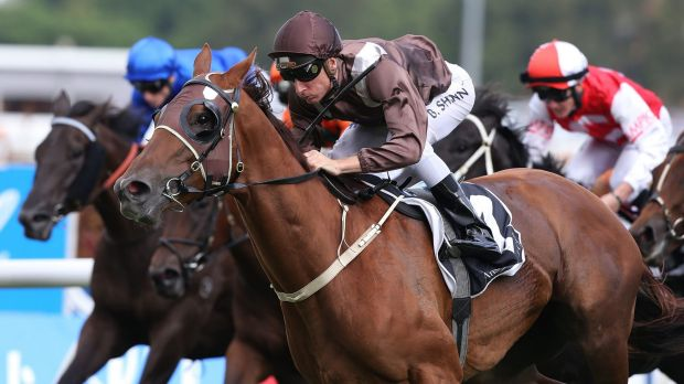 Proven performer: a full brother to Sweet Idea will get plenty of attention at the Magic Millions sale on the Gold Coast.