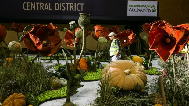 Volunteer Grant Frank works at ensuring the display, which includes giant poppies, is finished by the opening of the ...