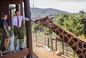 Chief Minister Andrew Barr feeds Hummer with assistance from keeper Amanda Hadley.