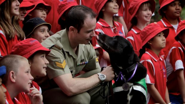 Hero dog: Sarbi after being awarded the Purple Cross in 2011.
