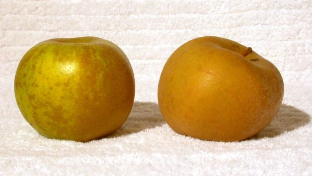 "Of the eye: Russetted apples have a rougher, brownish skin but are ""delicious"", says Anna Lee."