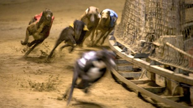 Four more people have been charged as part of an investigation into live baiting in Queensland's greyhound racing industry.