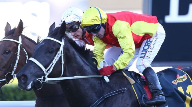 Pump action: Jim Cassidy, on Grand Marshal, pips Who Shot Thebarman  to win the Sydney Cup.