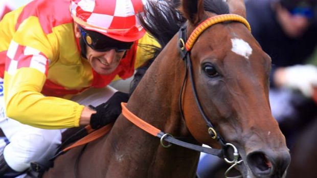 Mad about you … Rod Quinn drives Sister Madly to victory. Damien Oliver takes the mount on Saturday.