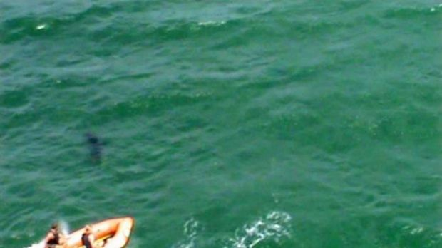 A surf life saving boat chases away the shark.