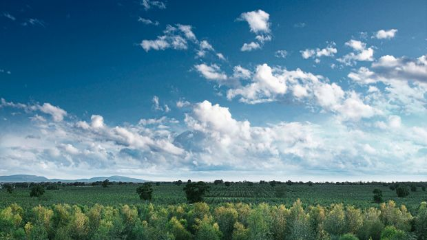 Tree planting soaks up carbon dioxide - but is it enough to help meet Australia's commitments?