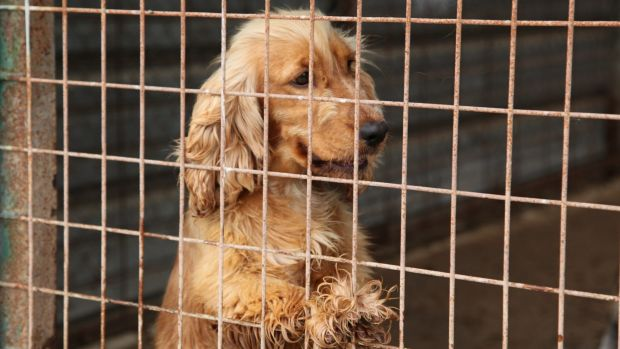 Conditions inside puppy farms can be squalid and confined.