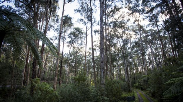 Most Australians' exposure to nature has disappeared.