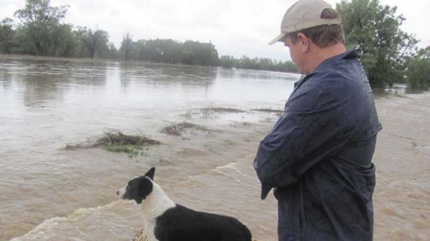 Flooded ... Ian Bailey and dog Scotty inspect the swollen Tycannah Creek, near Moree.