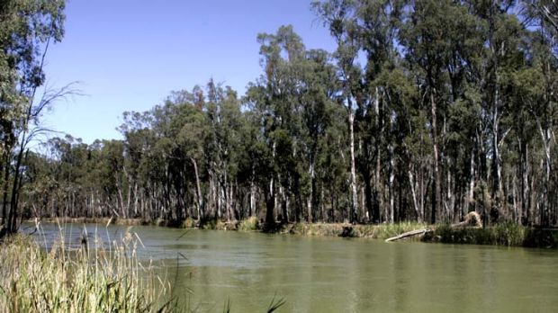 """An estimated 30 billion litres a day is required to sustain river red gum forests along the rivers, with a flood event ..."