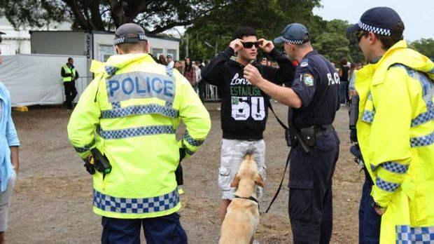 Police say ''accurate'' … a sniffer dog at a festival.
