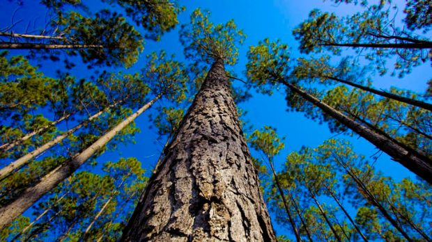 The by-products of forestry can provide a renewable energy source.