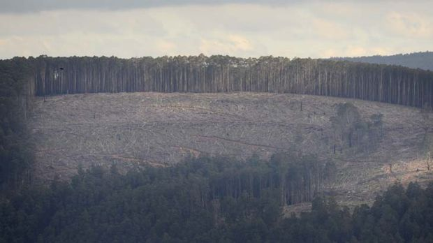Soaring numbers ... an area equivalent to 138,400 football fields was cleared in NSW's bushland last year.