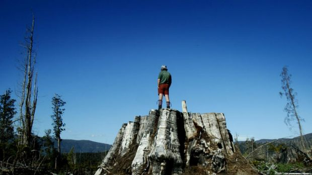 The aftermath of logging the world's tallest hardwood trees for woodchips in the Styx Valley, Tasmania.