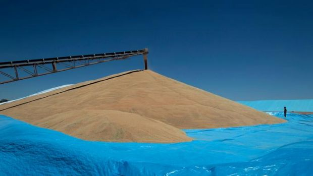 About 30 per cent of last year's record harvest remains in storage.
