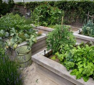 A healthy vegetable plot.