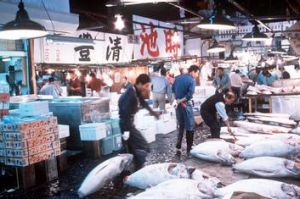 The fisherman learnt the ike jime method of killing catch at the Tsukiji fish market in Tokyo.