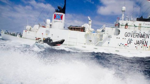 A small boat from the Sea Shepherd vessel, Steve Irwin, makes a reconnaissance trip past the Japanese whaling ship the ...