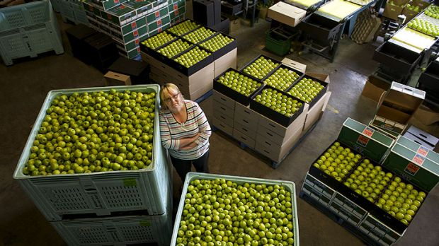 Orchardist Sue Finger says  growers could benefit as long as supermarkets pay a fair price.