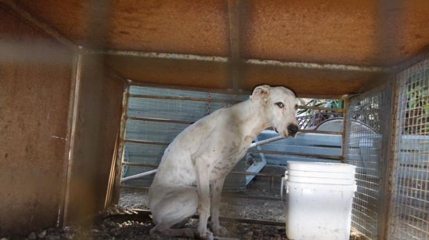 One of the dogs had been living in these conditions at the Rockbank property.