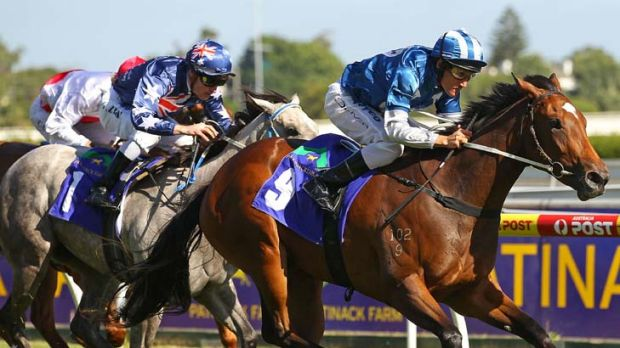 Class act: Malasun, the new favourite for the Blue Diamond Stakes, wins the Preview for fillies at Caulfield 11 days ago.