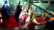 Animal Liberation speaks out (Video Thumbnail)