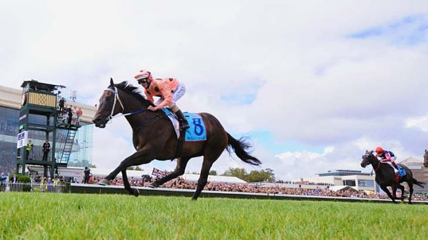 How far: Luke Nolen eases Black Caviar down as she wins the Orr Stakes last Saturday.