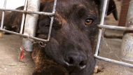 Dead dog's injuries 'consistent' with dog fighting (Video Thumbnail)