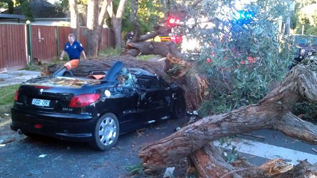 The scene this morning after part of a tree came crashing down on a woman's car.
