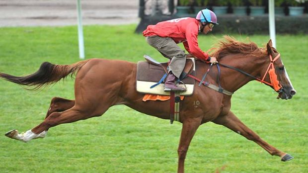 Toorak Toff being put through his paces at Flemington yesterday.