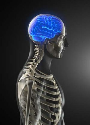 Brain scans of NASA astronauts who have been in space for longer than a month have revealed a pattern of deformities ...