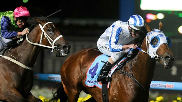 On a high: The Peter Moody trained Highly Recommended wins the Alister Clark Stakes last night.