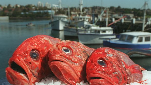 Numbers crunched  ... orange roughy is still being caught.