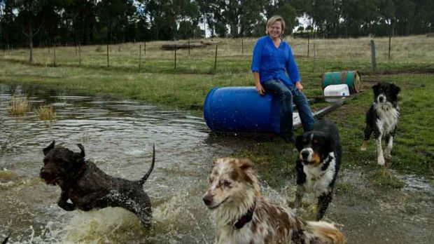 Pauleen Bennett with some of her dogs.