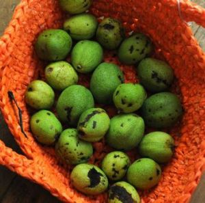Walnuts, if you pick them green and before the nut forms, they're good for pickling.