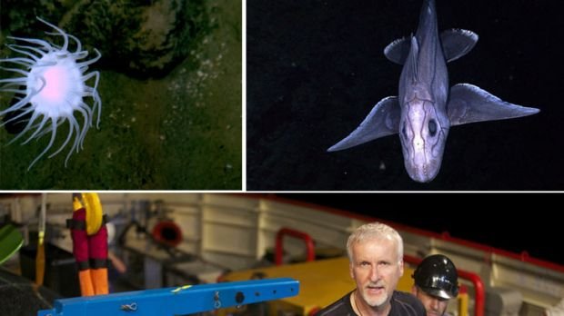 James Cameron with his Deepsea Challenger ... diving down 11 kilometres to the Mariana Trench where the stalked anemone ...