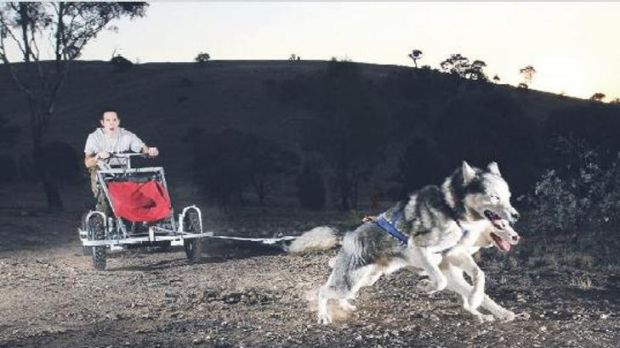 Dogs born to run with a rare breed