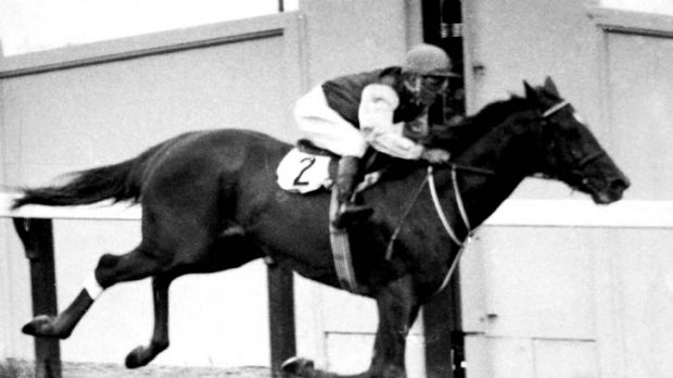 Toppled … Golden Slipper winner Todman in full flight in 1960. He was upset by Tulloch in the Sires.