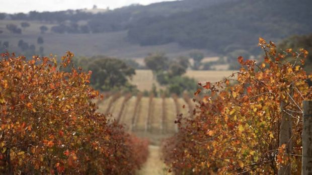 Income plus ... the Orange property, bordering Belgravia Vineyard, includes Bellview Farm and a vineyard of its own.