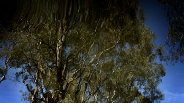 Fragile river red gums ... the Nature Conservation Council said the inquiry, which would be chaired by Shooters and ...