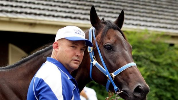 Champion at the bit: Trainer Peter Moody with his superstar sprinter Black Caviar, who is headed to Adelaide this week.