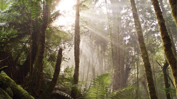 Tasmania's 447,000 hectare Tarkine ... home to the world's second largest temperate rainforest is in danger of ruin.