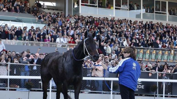A well-oiled machine ... Black Caviar can now add the impressive feat of changing the time of an AFL match to her CV.