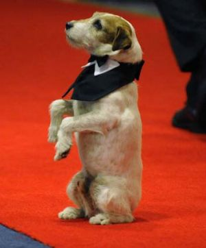 Uggie walks the red carpet for the annual White House Correspondents' Association Dinner in Washington last month.