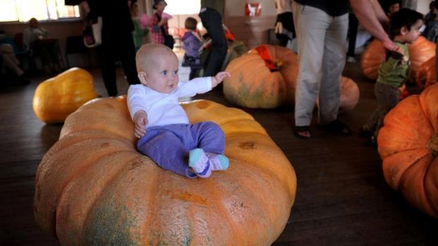 Six month old Josephine Trim at last year's Collector pumpkin festival.