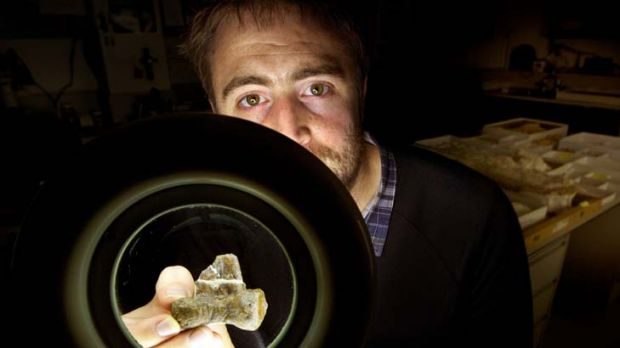 Discovered … Museum Victoria palaeontologist Erich Fitzgerald examines the bone of a new species of Australian ...