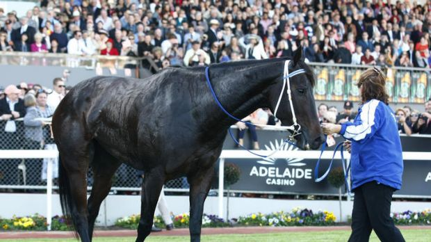 During Black Caviar's big race in Adelaide last month, the art of racecalling took the over-the-top route to the finish line.