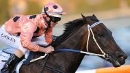 Next stop for Black Caviar... Royal Ascot (Video Thumbnail)