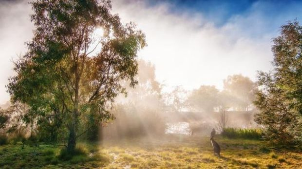This photo has been entered in the Canberra Times Autumn photo competition by Christine Bamford. Welcome to frosty ...