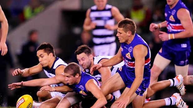 Cat and Dog fight: Geelong's Mathew Stokes (left) and Jimmy Bartel battle for possession with Daniel Pearce and Ryan ...